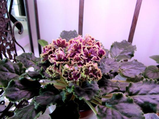 Jem Flower